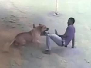 """Thế giới - Video: Tên trộm khổ sở vì bị chó giữ nhà """"hành hạ"""""""