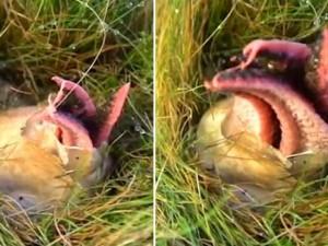 Phi thường - kỳ quặc - Sinh vật lạ chui ra từ trứng gây xôn xao ở Anh