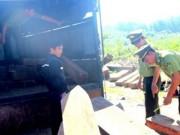 An ninh Xã hội - Bắt xe tải chở hàng chục phách gỗ lậu thuộc nhóm quý
