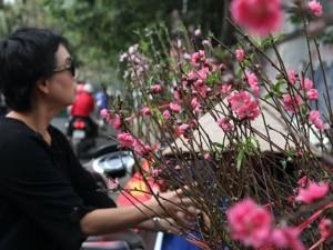 Tin tức trong ngày - Hà Nội: Đào Nhật Tân xuống phố sớm đón Tết Dương lịch