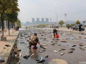 Thế giới - 10 vụ rơi vãi và hôi của nổi tiếng nhất Trung Quốc 2015