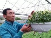 Thị trường - Tiêu dùng - Choáng với hạt giống cây cảnh lạ giá 250.000 đồng