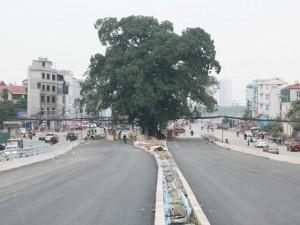 """Tin tức trong ngày - Những con đường phải né """"cụ cây"""" trăm tuổi ở Thủ đô"""