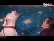 Phi thường - kỳ quặc - Video: Chú chó biết hát gây sốt cộng đồng mạng