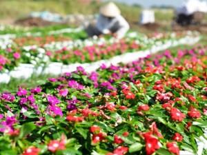 Tin tức trong ngày - Rực rỡ sắc màu trên những vựa hoa ở Sài Gòn