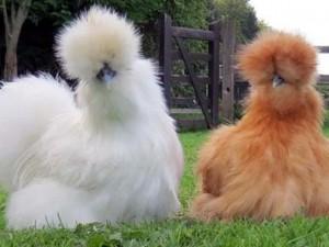 Phi thường - kỳ quặc - 5 loài vật có bộ lông 'độc' nhất thế giới