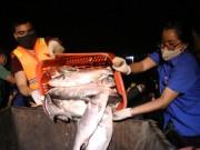 Clip: Khám phá lộ trình của xe chở cá chết Hồ Tây