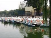 Tin tức trong ngày - Nữ giáo viên thuê thuyền thiên nga ra giữa hồ tự tử