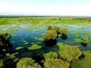 Du lịch - Đến Vườn quốc gia Tràm Chim mùa nước nổi