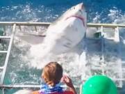 """Thể thao - Chung lồng với cá mập """"điên"""", VĐV lặn suýt bỏ mạng"""