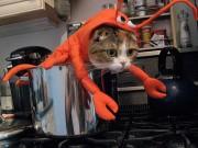 Chọn đồ cho các bé mèo đi chơi hội Halloween