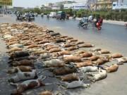 Lo cho dân, Pakistan giết hơn 1.000 con chó