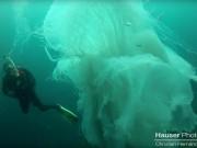 Thợ lặn gặp sứa khổng lồ to hơn người cực hiếm