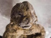 Xác ướp sư tử con nguyên vẹn hơn 3 vạn năm ở Siberia