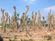 """Tin tức trong ngày - Cận cảnh khu vườn nghỉ dưỡng của các """"cụ cây"""" Kim Mã"""