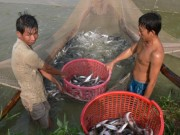 Thị trường - Tiêu dùng - Kiểm soát chặt thủy sản xuất khẩu