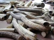 Thị trường - Tiêu dùng - Nghiền nhỏ, đốt thành tro 2 tấn ngà voi, 70 kg sừng tê giác