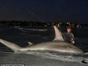 """Thế giới - Ngư dân Úc câu được cá mập đầu búa """"khủng"""" nhất thế giới?"""