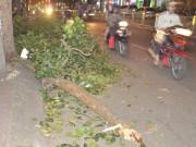 Tin tức trong ngày - Cả gia đình gặp nạn vì nhánh cây rơi ở độ cao 30m xuống đường