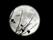 Ngắm siêu trăng lớn nhất 70 năm qua trên toàn thế giới