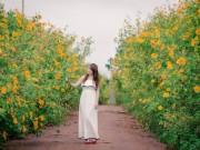 Lâm Đồng vàng óng sắc hoa dã quỳ dưới nắng đầu đông