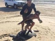 """Thế giới - Úc: Du khách """"lướt ván"""" trên lưng rùa quý gây phẫn nộ"""