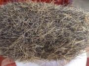 Tin tức trong ngày - Mổ lợn nái, phát hiện cát lợn nặng gần 1kg