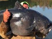 Thế giới - Mỹ: Câu được cá trê khổng lồ như cá voi nhỏ