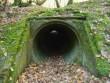 Những đường hầm bí ẩn trong rừng Anh quốc