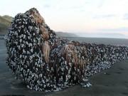Vật thể khổng lồ bí ẩn dạt vào bờ biển New Zealand