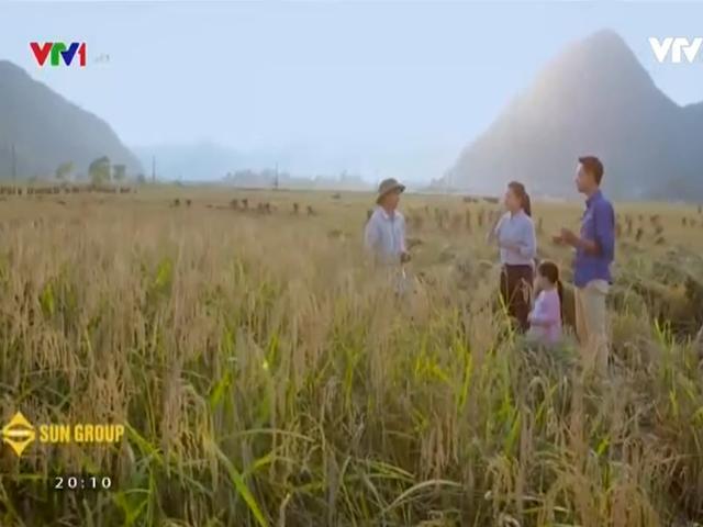 Lạc lối trong thung lũng lúa chín tráng lệ nhất Lào Cai - 15