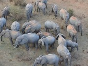 Phi thường - kỳ quặc - Người đàn ông Kenya ngủ cùng 60 con voi mồ côi