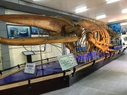 Viện Hải dương học Nha Trang - Kho tàng sinh vật biển lớn nhất Việt Nam