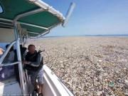 """Thế giới - Kinh hoàng cảnh vùng biển Caribe bị con người """"giết hại"""""""