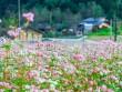 Vi vu Hà Giang ngắm mùa hoa tam giác mạch nở đẹp ngất ngây