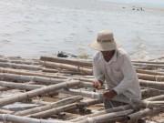 Khánh Hòa: Người dân nuôi thủy sản, tôm hùm nợ chồng chất sau bão