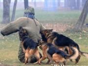 Thế giới - Bí mật loài chó nghiệp vụ cực kì tinh nhuệ của mật vụ Mỹ