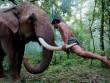 """Chú voi trong phim """"Truy tìm tượng Phật"""" bất ngờ hại chết chủ"""