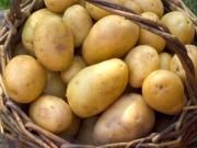 Sức khỏe đời sống - Khoai tây chế biến theo cách này là thần dược chữa bệnh gan, dạ dày