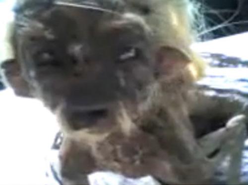 """Video chuyện lạ: """"Quái vật"""" ở Indonesia - 1"""