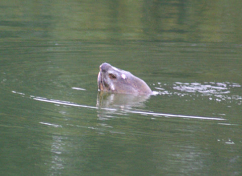 Bí ẩn Cụ Rùa Hồ Gươm - 2