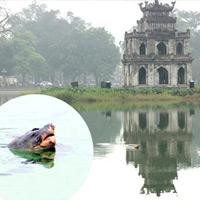 Bí ẩn Cụ Rùa Hồ Gươm