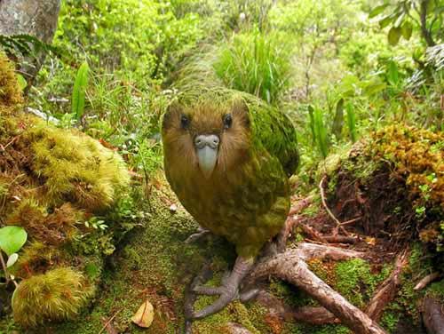 Những loài chim quý và hiếm nhất - 1