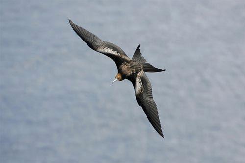 Những loài chim quý và hiếm nhất - 3