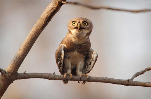 Những loài chim quý và hiếm nhất - 4