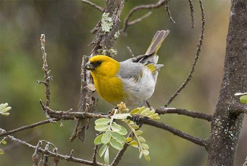 Những loài chim quý và hiếm nhất - 5