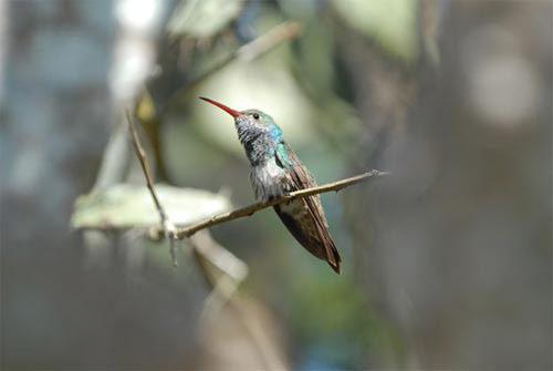 Những loài chim quý và hiếm nhất - 6