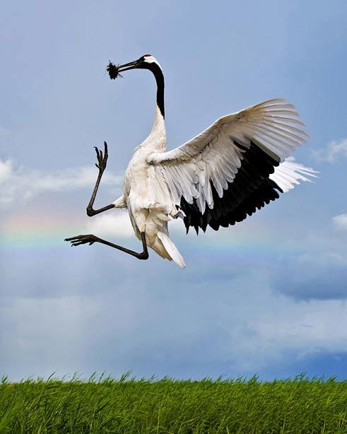 Những loài chim quý và hiếm nhất - 8