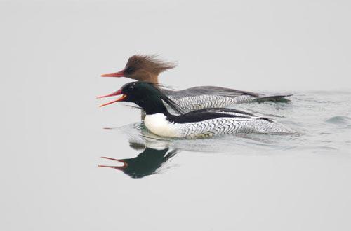Những loài chim quý và hiếm nhất - 11