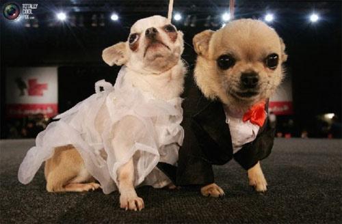Mặc áo đẹp cho cún - 2